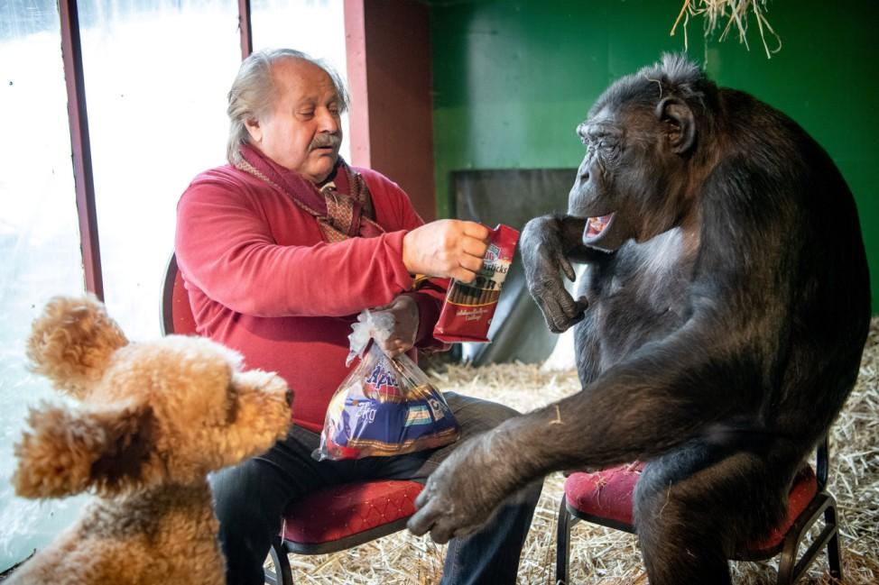 Zirkusschimpanse Robby