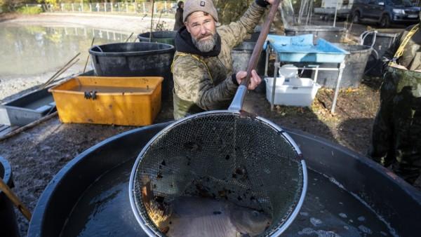 Kleinhesseloher See wird abgefischt