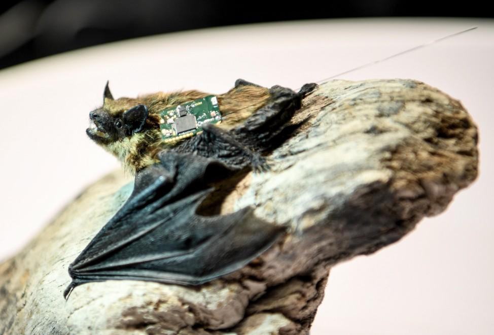 Vorstellung System zur Wildtierbeobachtung