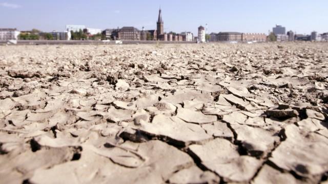 Hitze: Trockenes Rheinufer im Sommer 2019
