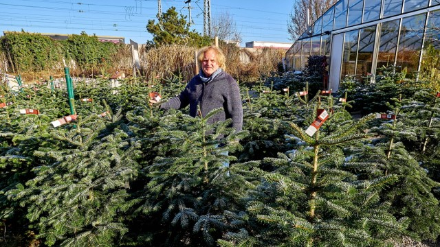 Nachhaltige Weihnachtsbäume Zorneding.