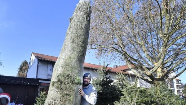Starnberg , Weihnachtsbäume Emanuel Schwaiger