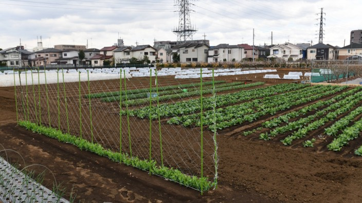 March 18 2018 Tokyo Japan A patch of so called Productive Green Area lies in the residential ar
