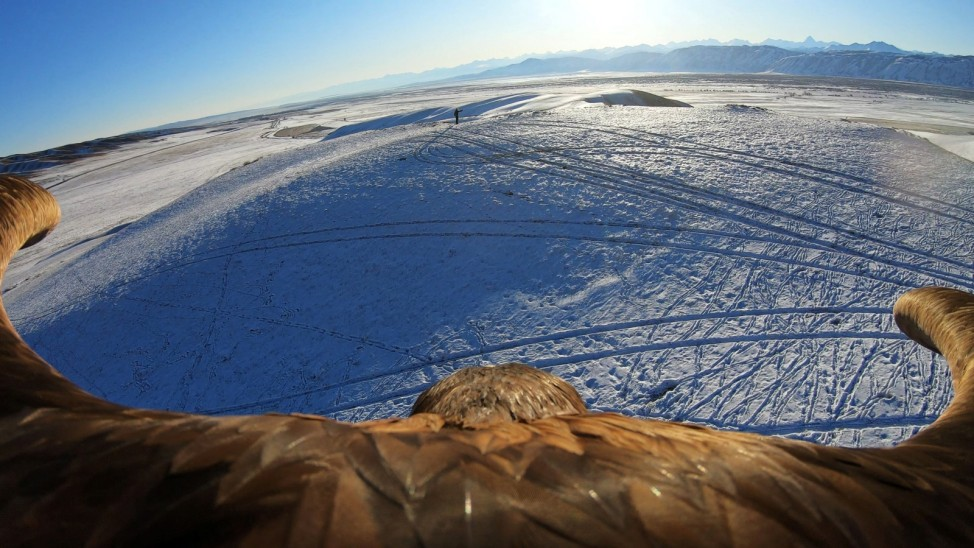 A still image taken from a video shows a tamed golden eagle soaring during a traditional hunting contest in Almaty region