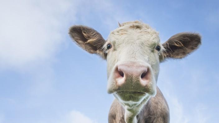 Cows against sky
