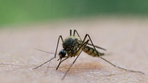 Bislang keine Anzeichen für Stechmückenplage