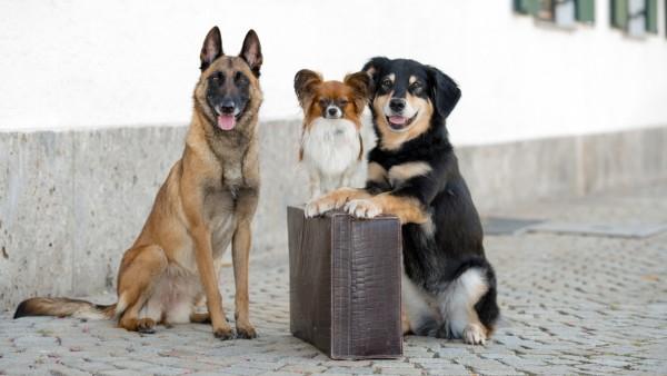 Hotel Hunde Oberammergau Wolf Bayern Urlaub mit Hund