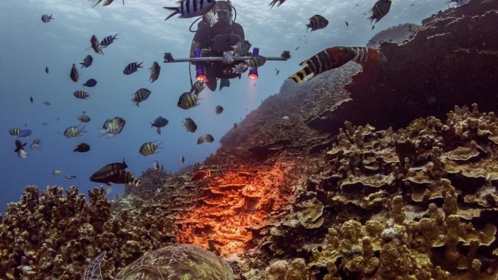 Das Bremer Start-up Planblue entwickelt Technologien, um weltweit Daten der Meeresböden zu sammeln
