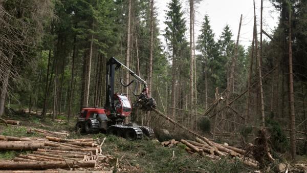 Schädlinge im Wald am Beispiel Taubenberg bei Gotzing und Weyarn