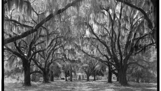 Rassismus und Literatur: Aus einer historischen Dokumentation der Library of Congress über die Südstaaten: Plantage in Charleston County.
