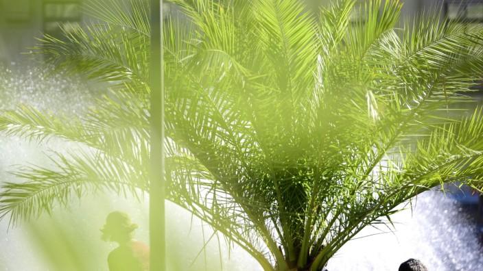 Eine Palme als Symbol für Wetterextreme in München