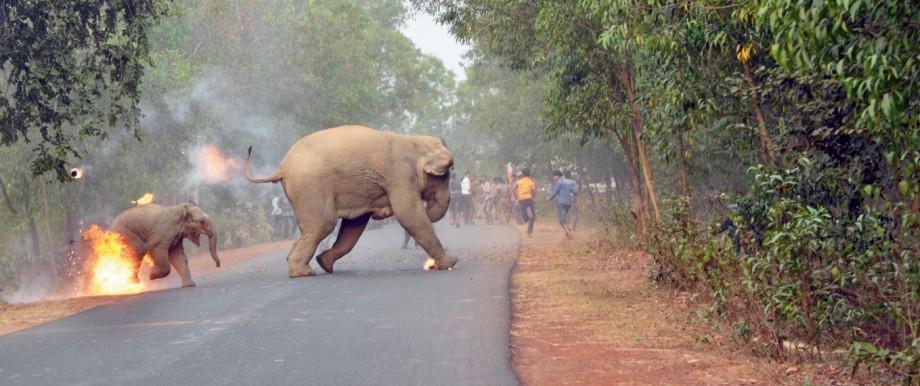 Bild eines brennenden Elefantenbabys gewinnt Wildlife Photography Preis