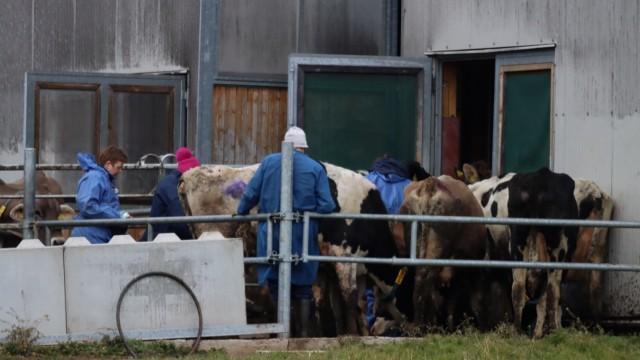 Tierschutzskandal im Allgäu