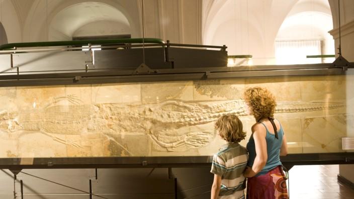 Fossilien im Jura-Museum Eichstätt.