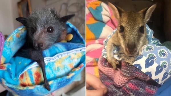 Tierhilfe für Australien