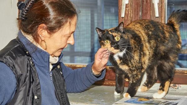 Katze Tierheim Maria Much