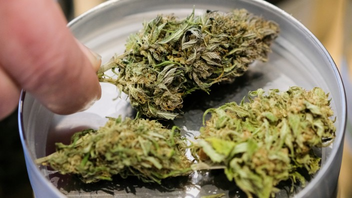 Cannabis-Modellversuch