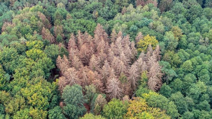 Waldschäden im Landeswald Sachsen-Anhalt