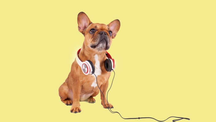 dog is listening to music PUBLICATIONxINxGERxSUIxAUTxONLY Copyright xpeppix Panthermedia13834931