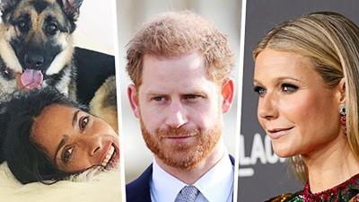 Promis: Prinz Harry kommt nach Deutschland