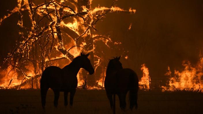 Buschbrände in Australien - Tiere