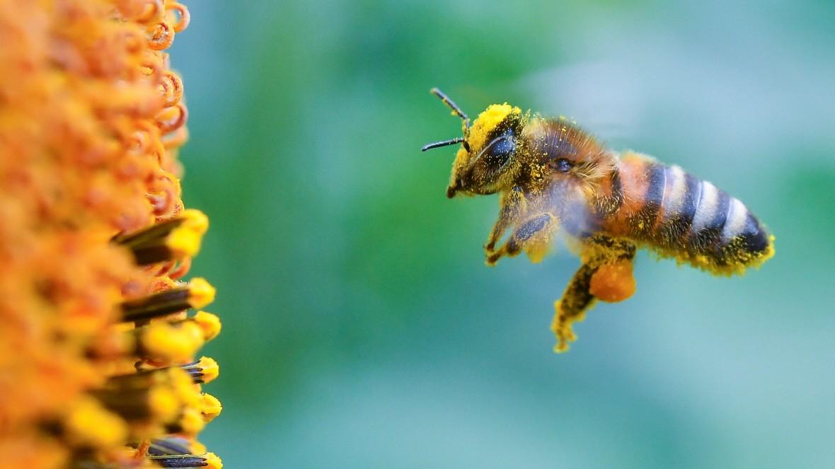 Werkeln für die Wildbiene