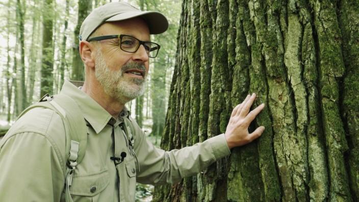 Kinostart - 'Das geheime Leben der Bäume'