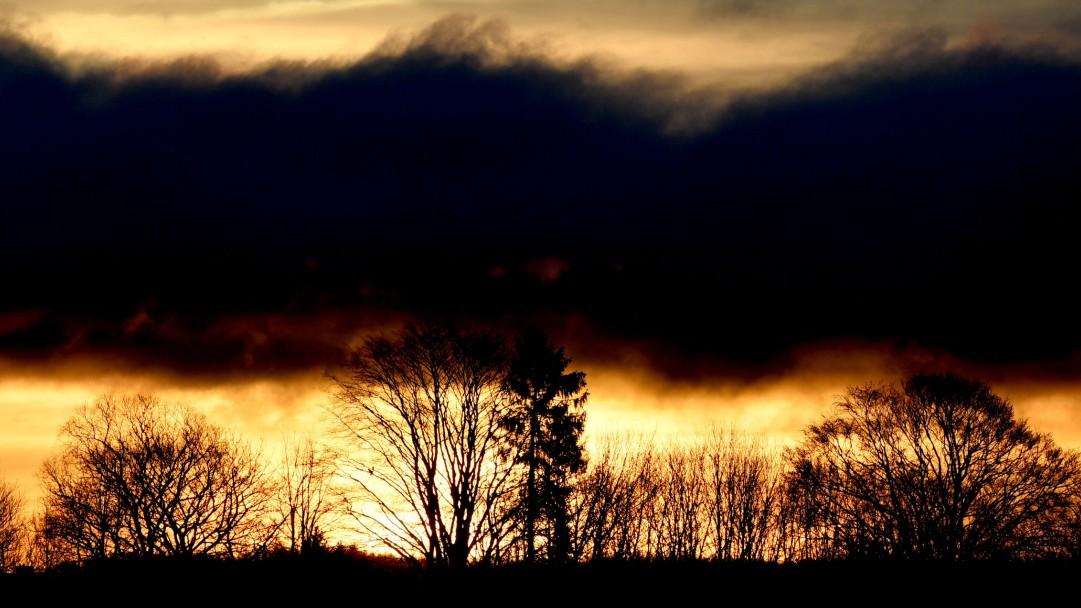 Klimawandel: Was bringen eine Billion neue Bäume?