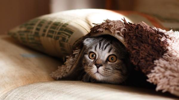 Kind haut Katze
