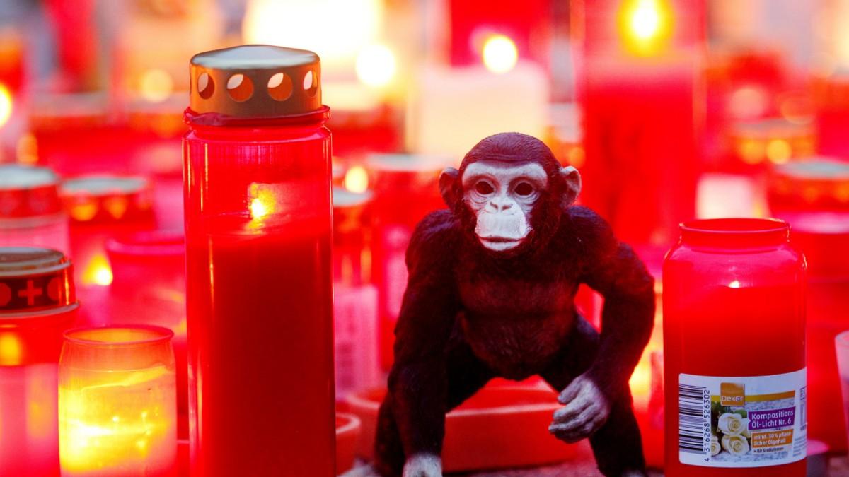Zoo beschließt nach Brand neues Affenhaus