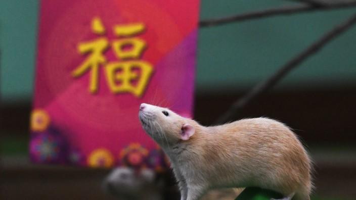 Begrüßung des 'Jahr der Ratte'