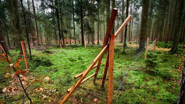 Forst - Waldsterben 2.0 - Verbissschutz und Verjüngung