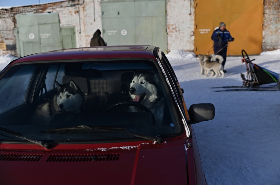 Dogs are seen inside a car during the Hyperborea-2020 dog sledrace in Omsk