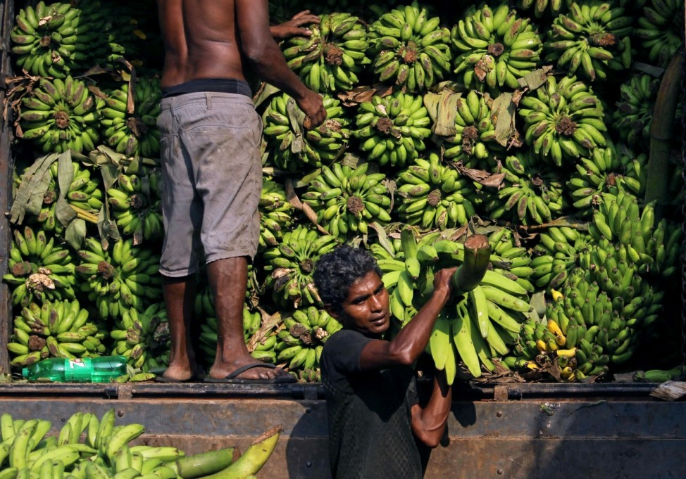 A laborer carries bananas to a stall at a main market in Colombo