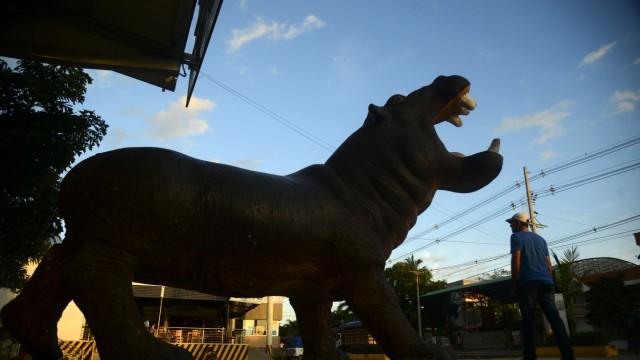 Ökologie: Nilpferde überall: Statue in der Nähe des ehemaligen Privatzoos.