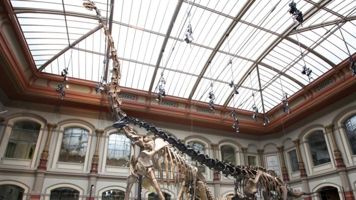 Gewaltiger Brachiosaurus war ein Leichtgewicht