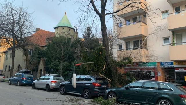 """Sturmtief """"Sabine"""": In der Karl-Theodor-Straße fiel ein Baum um"""