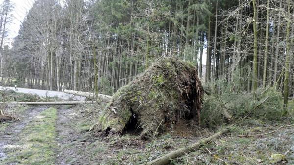 Sturm Sabine
