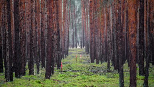 Tesla-Gelände - Wald