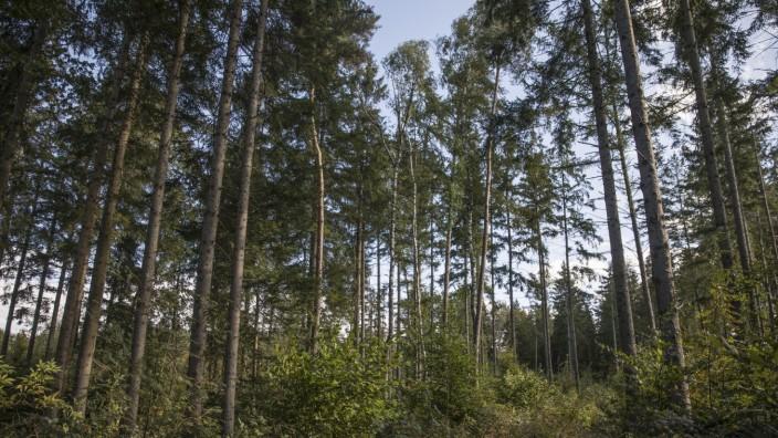 Mischwald im Rothschwaiger Wald