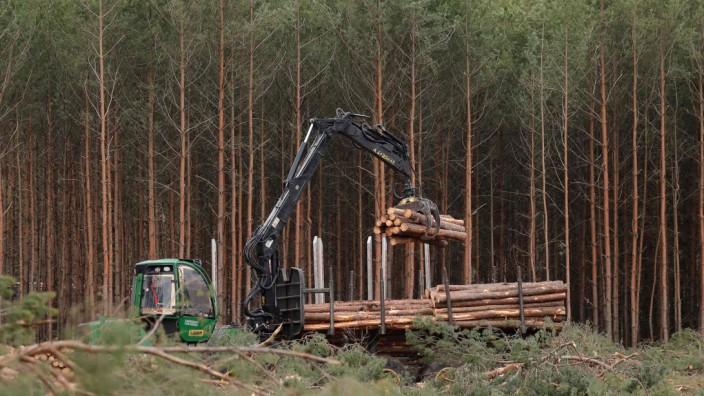 Brandenburg: Waldrodung für neue Tesla-Fabrik in Grünheide