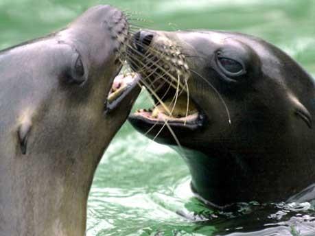 Kuss, Küsse, küssen
