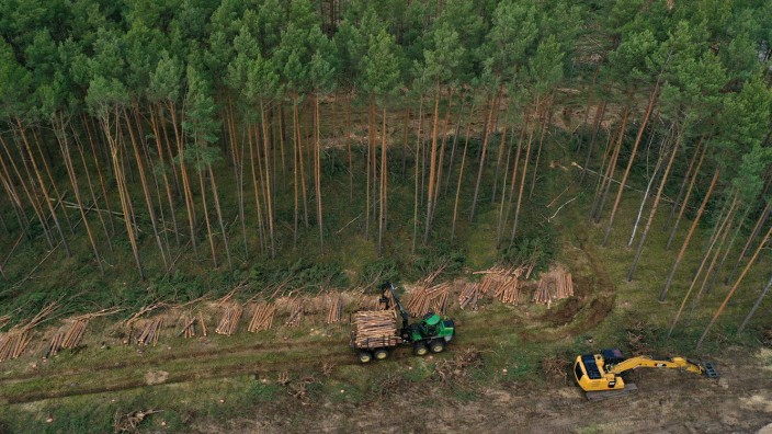 Environmentalists Seek To Block Tesla From Factory Site Deforestation