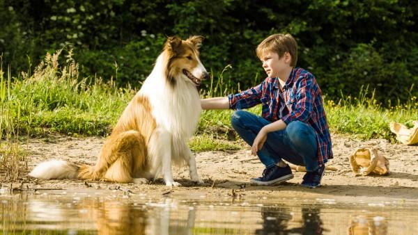 Kinostart - 'Lassie - Eine abenteuerliche Reise'