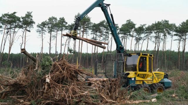 Brandenburg: Waldrodung für Tesla-Werk in Grünheide