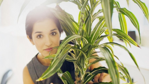 Businesswoman hiding behind plant in office Portrait of businesswoman hiding behind plant in office