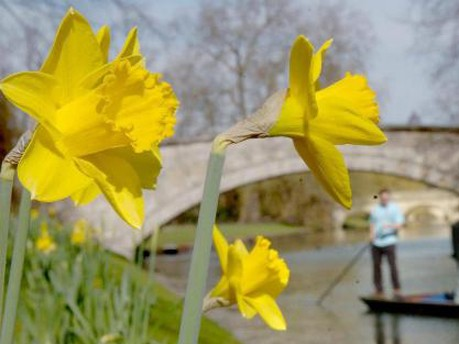 Osterglocken im Frühling, dpa