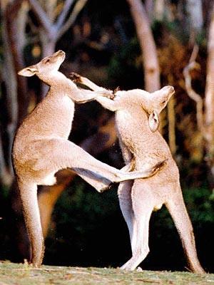 Survival-Guide Australien