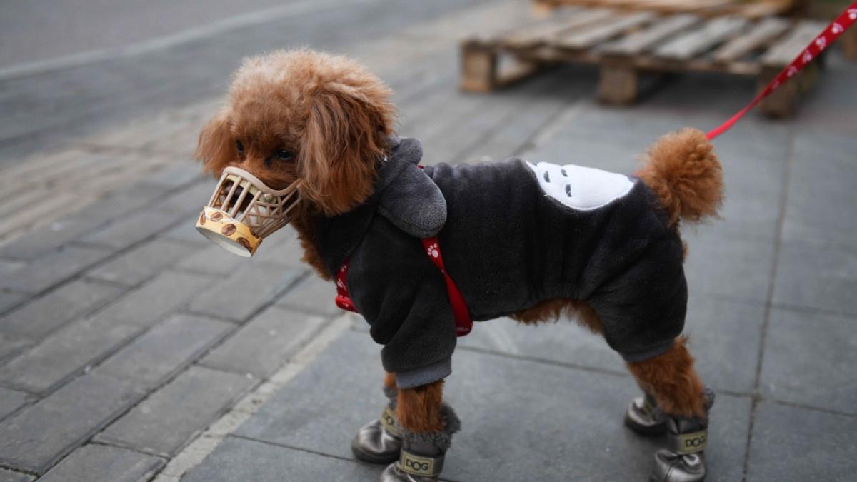 """Covid-19: Hund """"schwach positiv"""" auf Virus getestet"""