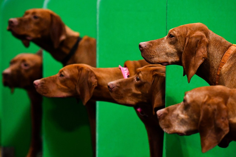 Crufts 2020 -Day Two
